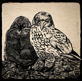 woodcut gannet and chick