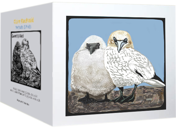 gannet and chick card photo