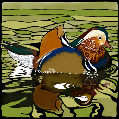 mandarin duck picture