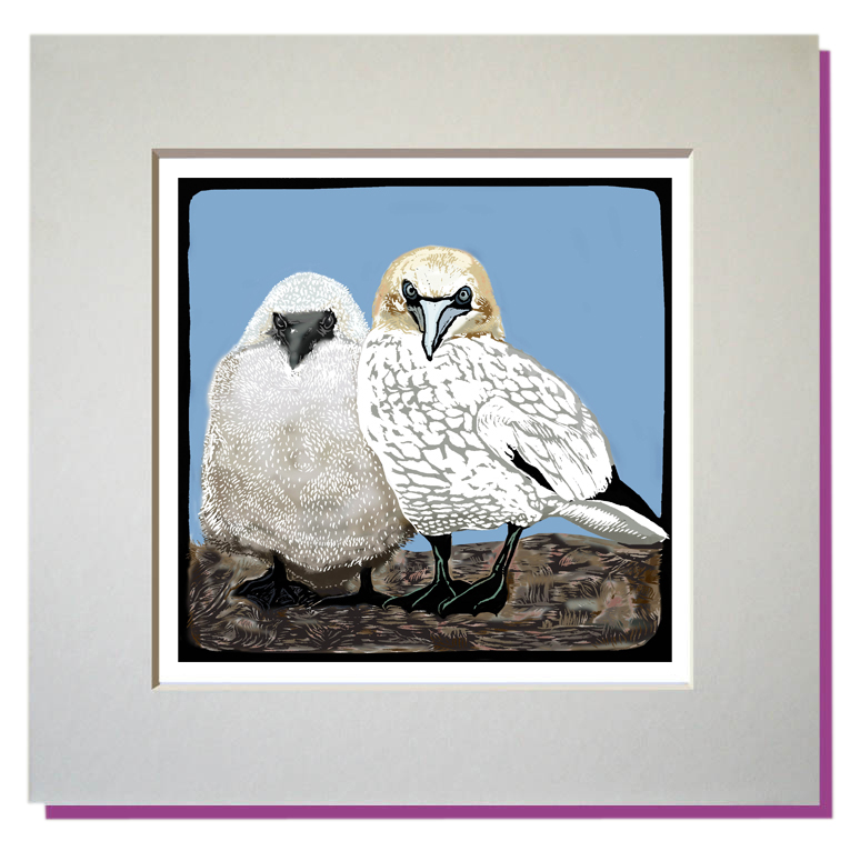 small print gannet and chick