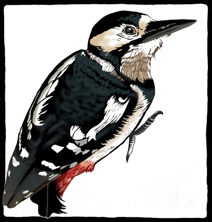 woodpecker picture