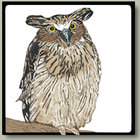 eagle owl button