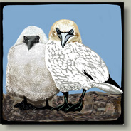 gannet and chick card button