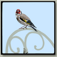 goldfinch button
