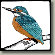 kingfisher card button
