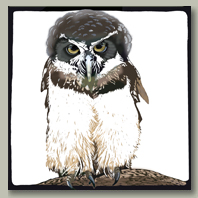 mexican spectacled owl card button