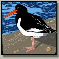 oystercatcher button