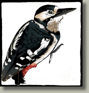 woodpecker card button